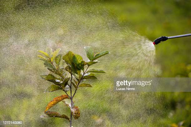 pesticide application - spray - in plant - uncultivated stock pictures, royalty-free photos & images