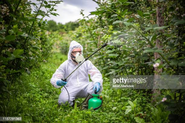 pesticide spraying - protection - insecticide stock pictures, royalty-free photos & images