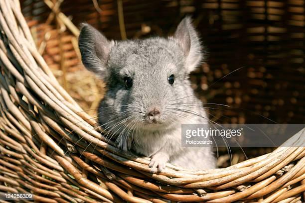 pet, alfred, animals, basket, body