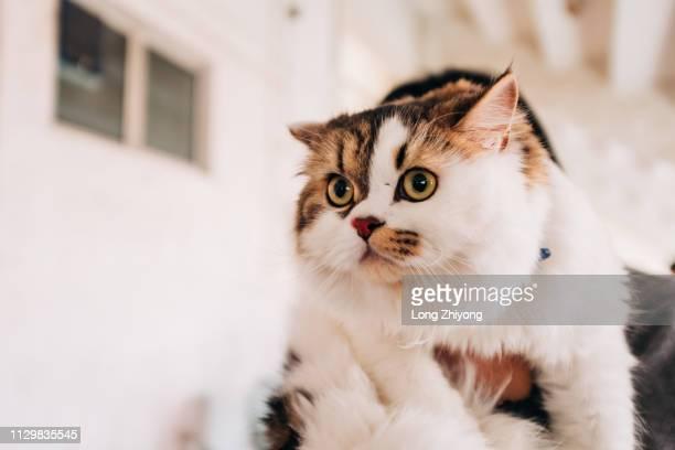 pet cat - 女人 stockfoto's en -beelden