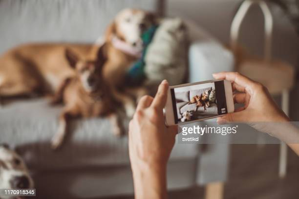 pet daycare - photographing stock pictures, royalty-free photos & images