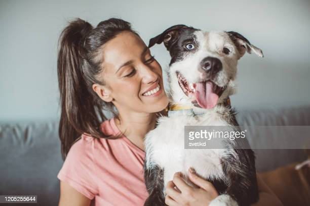 pet daycare - mixed breed dog stock pictures, royalty-free photos & images