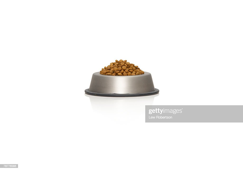 Pet Dish with Food : Stock Photo