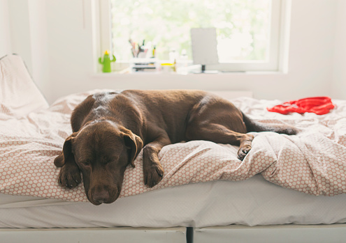 Pet dog asleep on teen's bed - gettyimageskorea