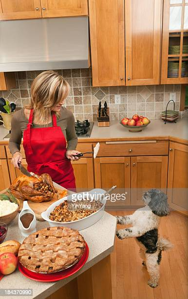 pet dog begging for thanksgiving turkey from woman in kitchen - thanksgiving dog stock photos and pictures