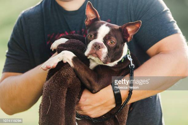 Pet dog being towelled dry