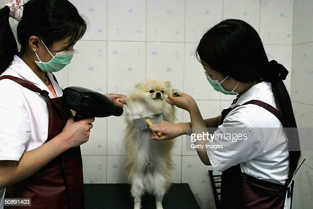 A pet dog gets a wash and brush up at a canine beauty parlour May 22 2004 in the Chinese capital Beijing The increase in pet ownership in urban China...