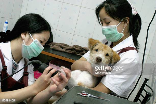 A pet dog gets its toenails clipped at a canine beauty parlour May 22 2004 in Beijing China The increase in pet ownership in urban China is a product...