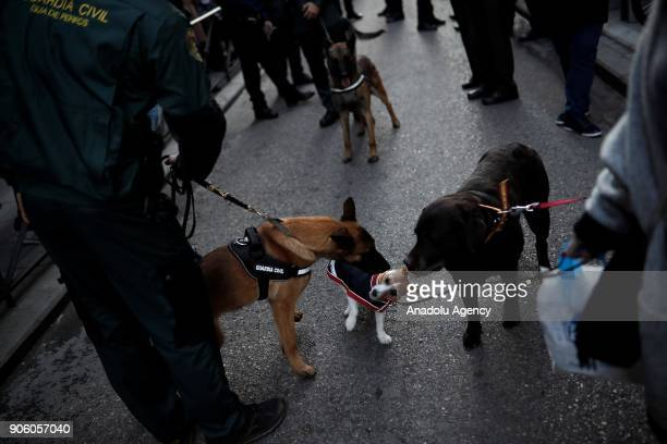 A pet dog is seen before being blessed on Saint Anthony's day dedicated to the animals by Spanish Christians at San Anton Church in Madrid Spain on...