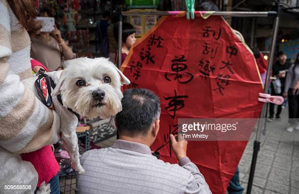 A pet dog looks on as a lantern is painted ahead of the Pingxi Sky Lantern Festival on February 11 2016 in Pingxi District New Taipei City Taiwan The...
