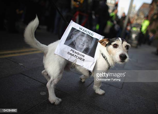 Pet dog Milo walks along a pavement with a sign tied around him during a march for the public sector strike on November 30 2011 in Liverpool United...