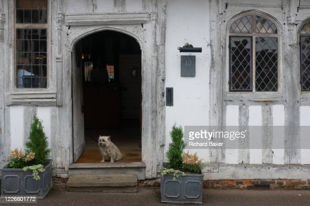 A pet dog sits on the step of a pub at 10 Lady Street on 9th July 2020 in Lavenham Suffolk England By the late 15th century the town was among the...