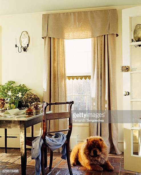 Pet dog stares while sitting in the living room