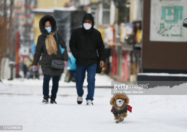 A pet dog wearing face mask walks with owner on snow amid novel coronavirus outbreak on March 4 2020 in Changchun Jilin Province of China