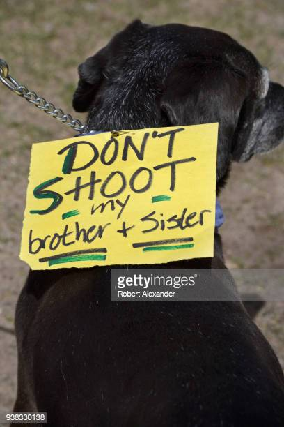 A pet dog wears a sign referring to school shootings at a 'March For Our Lives' rally in Santa Fe New Mexico The rally and march part of a nationwide...