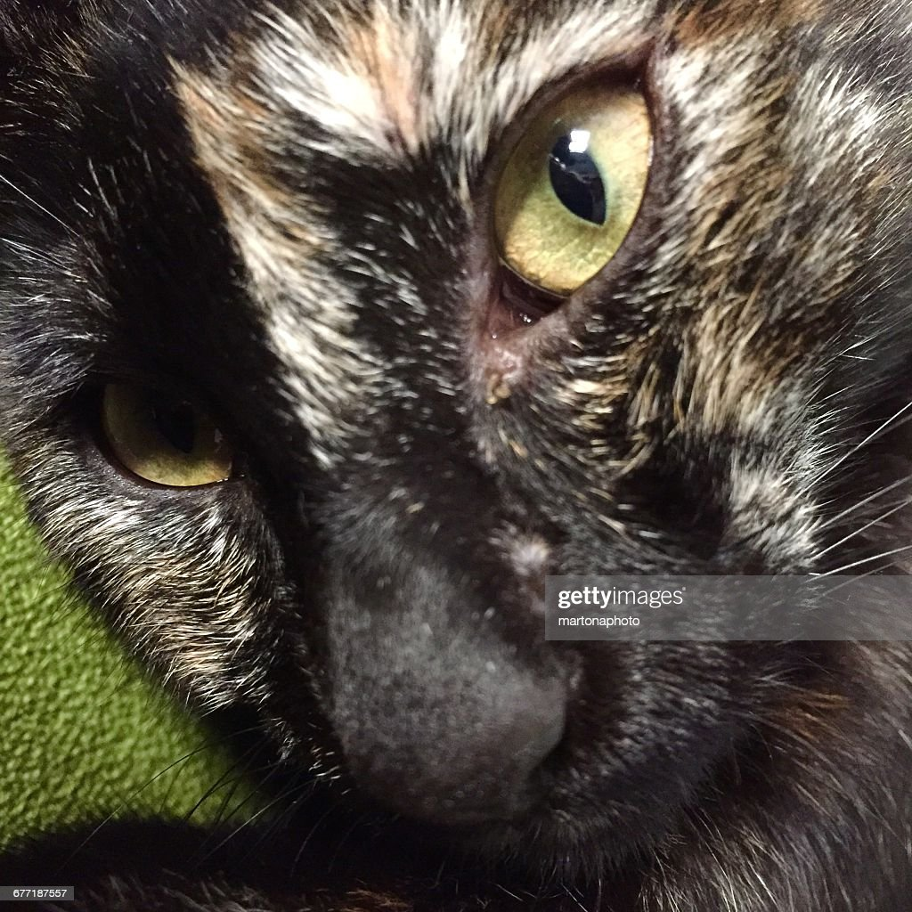 Pet Extreme Close-ups  : Foto de stock