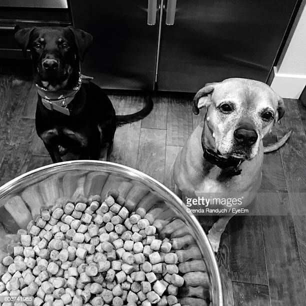 Pet Food Over Dog At Home