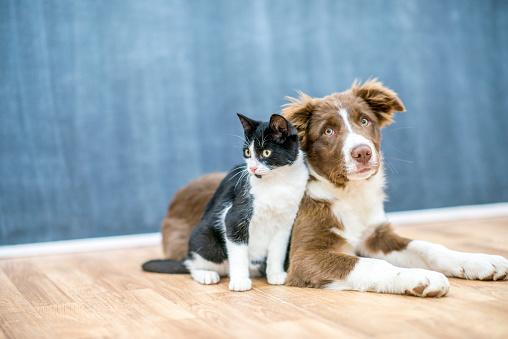 Pet Friends 967525964