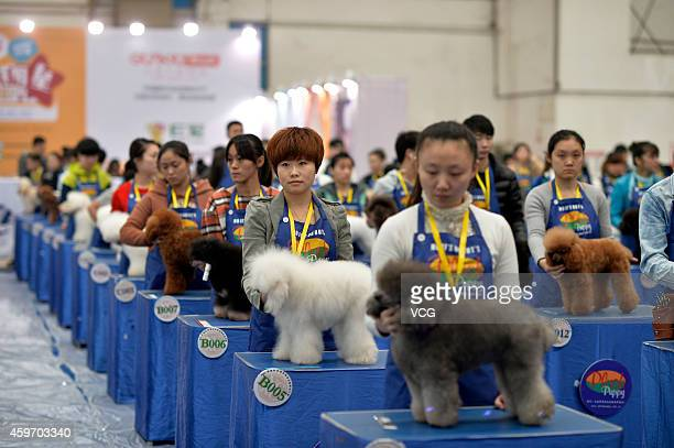 Pet groomers make up their dogs during the 2nd Chongqing Pets Festival on November 28 2014 in Chongqing Sichuan province of China The 2nd Chongqing...