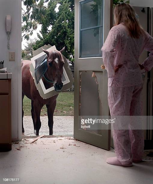 pet horse trying to come through doggy door - breaking stock pictures, royalty-free photos & images