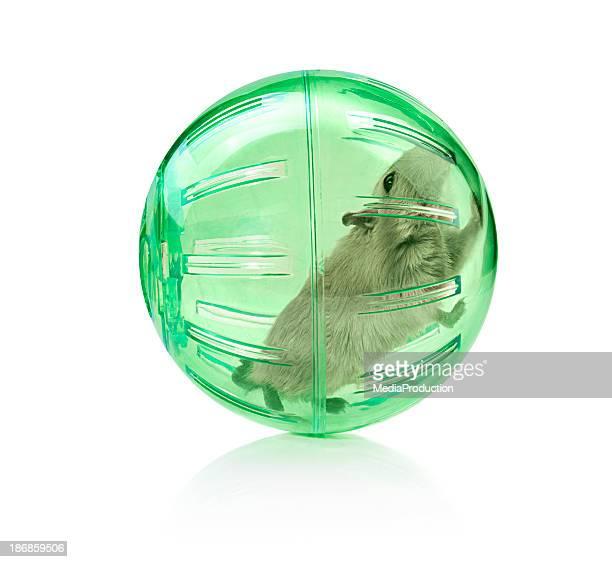 Pet in a ball
