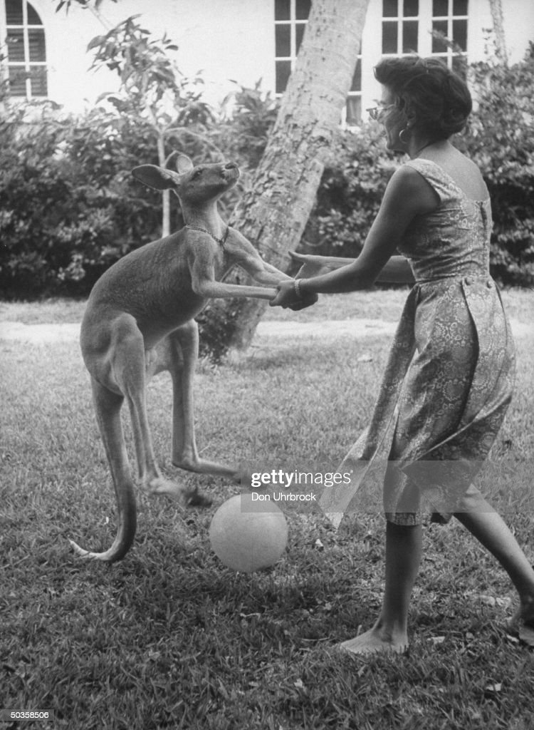 Pet Joey the kangaroo getting a little help in kicking the soccer ball.