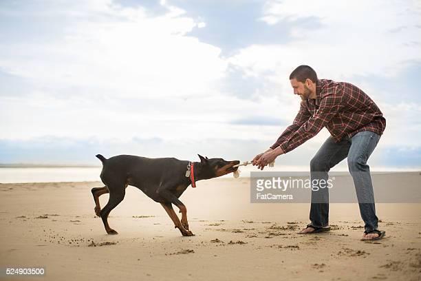 Haustier Eigentümer spielen Tauziehen mit seinem Hund am Strand