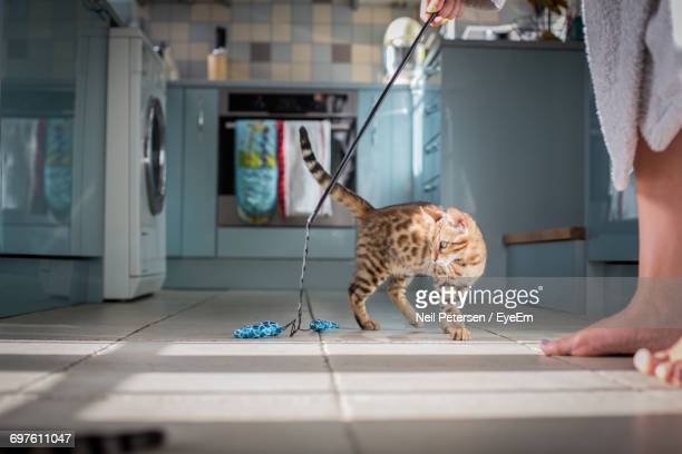 Pet Owner Playing With Cat