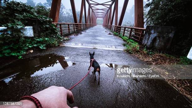 pet owner's walking the dog after the rain in the foggy morning at rural japan against old bridge - koukichi stock pictures, royalty-free photos & images