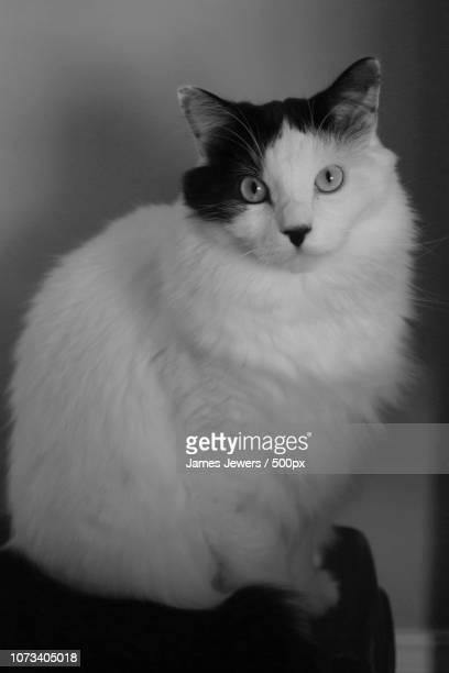 Pet Portrait Of Oliver