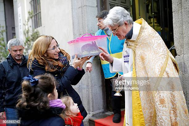 A pet rabbit is being blessed by a priest at San Anton Church in Madrid Spain on Saint Anthony's day dedicated to the animals by Spanish Christians...