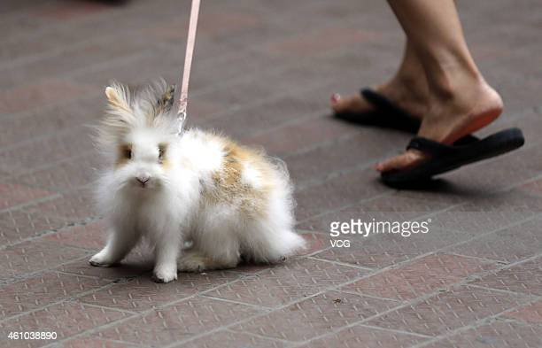 A pet rabbit is seen on July 3 2014 in Xi'an Shaanxi Province of China