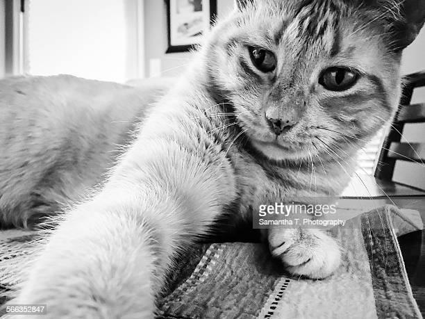 Pet Selfie