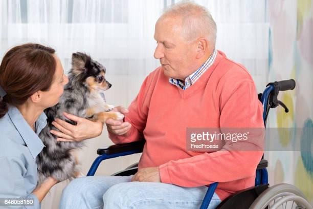 Soins pour animaux de compagnie – homme Senior avec petit chien