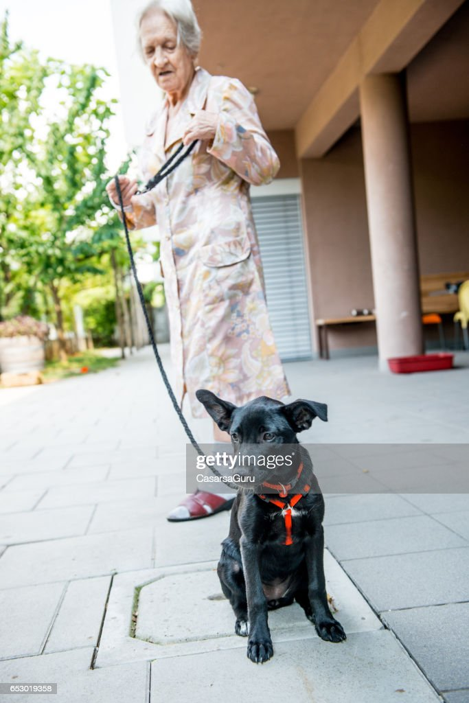 Pet Therapy - Senior Woman In The Retirement Home Taking Dog Out : Stock Photo