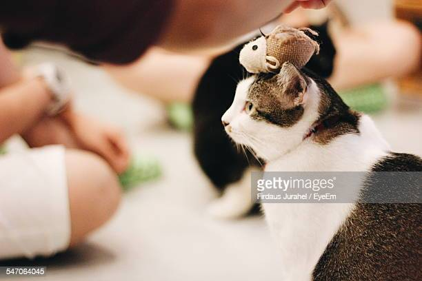 Pet Toy On Cats Head