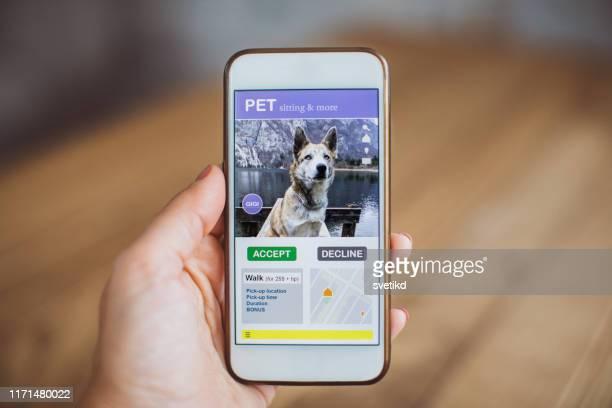 pet andando e sentado aplicação móvel - modelo de base - fotografias e filmes do acervo