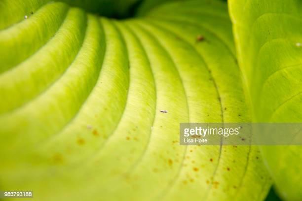 Petal and Leaf Nature