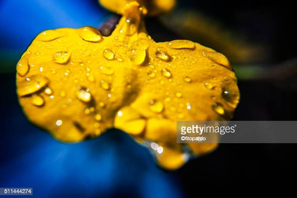 petal with water drops