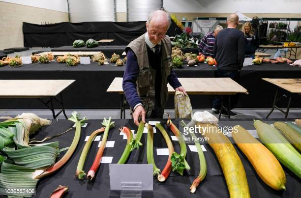 Pete Glazebrook from Newark arranges his giant Rhubarb as he prepares for the giant vegetable competition on the first day of the Harrogate Autumn...