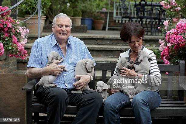 Peter Alliss of England the legendary BBC television Golf commentator at home with his wife Jackie and their 12 Weimaraner puppies on July 22 2016 in...