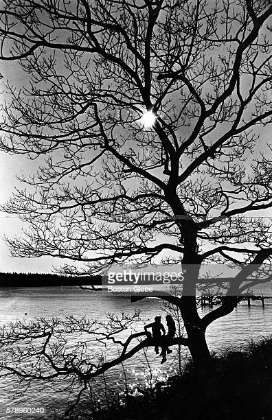 Peter Armstrong of Friendship Maine and Jane Mahoney of Roslindale Mass sit on a tree limb over the harbor in Friendship Maine on Nov 4 1979