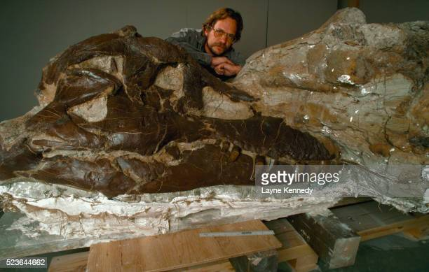 peter larson with tyrannosaurus skull - palaeontology stock pictures, royalty-free photos & images