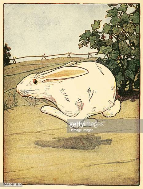 Peter never stopped running, from The Tale of Peter Rabbit, pub. 1916 , 1916. Artist American School .