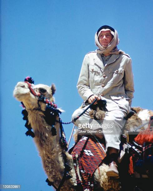 Peter O'Toole Irish actor riding a camel n a publicity still issued for the film 'Lawrence of Arabia' 1962 The historical drama directed by David...