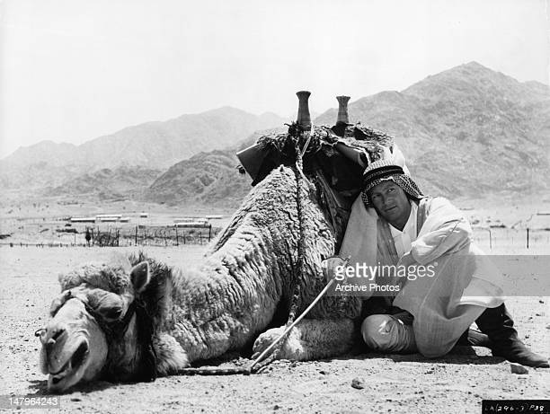 Peter O'Toole with his camel Shagran in between scenes from the film 'Lawrence Of Arabia' 1962