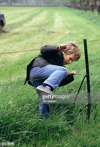Peter Phillips At The Royal Windsor Horse Show Trying To Climb Through A Fence