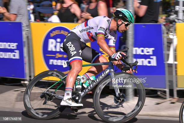 Peter Sagan of Slovakia and Team Bora-Hansgrohe / during the 2019 Tour Down Under Classic a 1 hour + 1 lap of 1,7km race from Adelaide to Adelaide /...