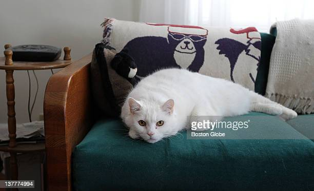 Peter Schlicting of Belmont complains that his mother's fat cats are FAT 'Kitty Cat' seen here weighs 26 pounds