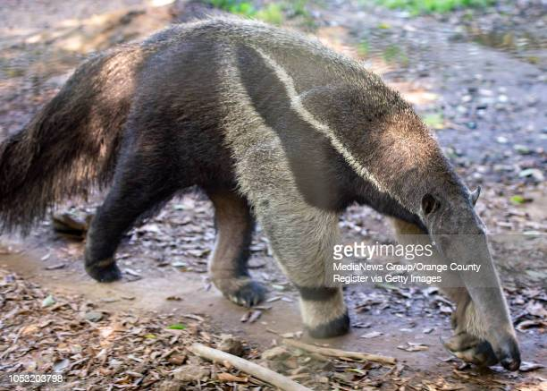 Peter the Giant Anteater brings laughter to a group of senior citizens touring the Santa Ana Zoo on Tuesday, October 9, 2018.